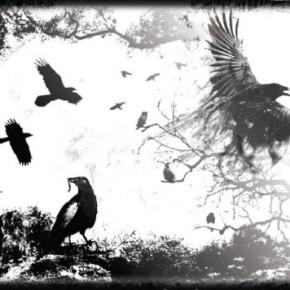 Cuervos10-290x290